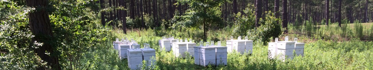 Georgia Bee Supply LLC